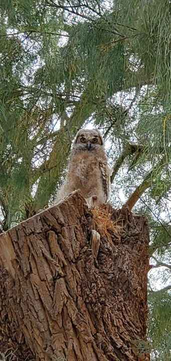 Birds are out in full display today... See the newest owlets...Spring is magical at Owl Owl River Resort and Event Cente...