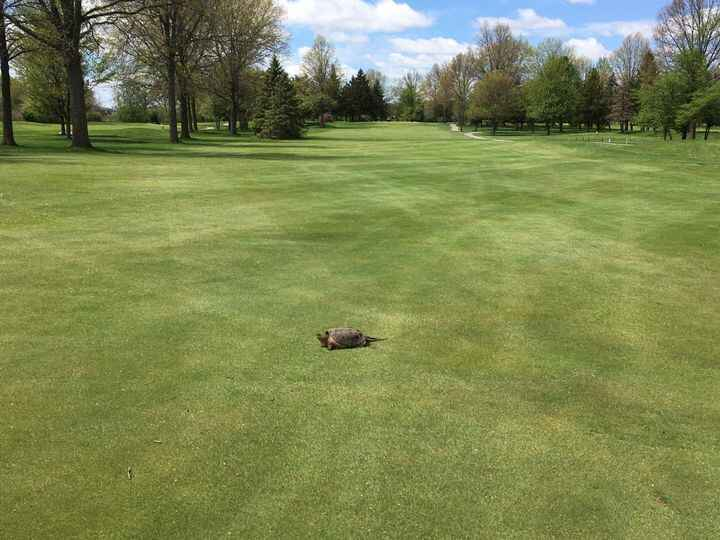 Are you guilty of slow play?  Be respectful and let faster golfers play through!